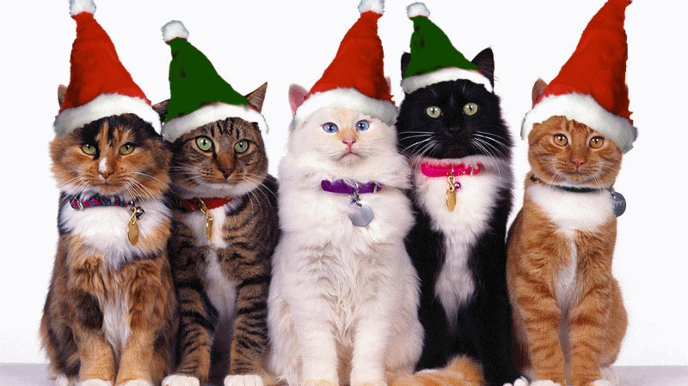 hd-desktop-pictures-1366x768-christmas-cats.jpg
